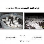 Agaricus_bisporus