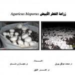 Agaricus_bisporus