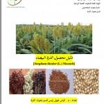 دليل محصول الذرة البيضاء