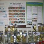 تجارب استزراع سمكي لأصناف السمك في نهر الخابور والفرات ضمن محطات بحوث اللاذقية