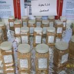 أصناف القمح المحسنة(قاسي وطري) ضمن برامج التربية في هيئة البحوث الزراعية