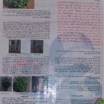 نبات الاستيفيا : مُحلّي طبيعي تم اكثاره بالأنسجة في مركز البحوث الزراعية بالسويداء