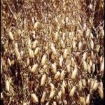 crops3.jpg