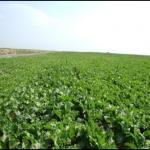 crops5.jpg