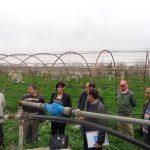 معاينة الأعشاب التي غزت الحقول وبحث طرق التخلص منها