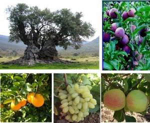 horticultureIMG1