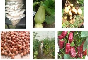 horticultureIMG2