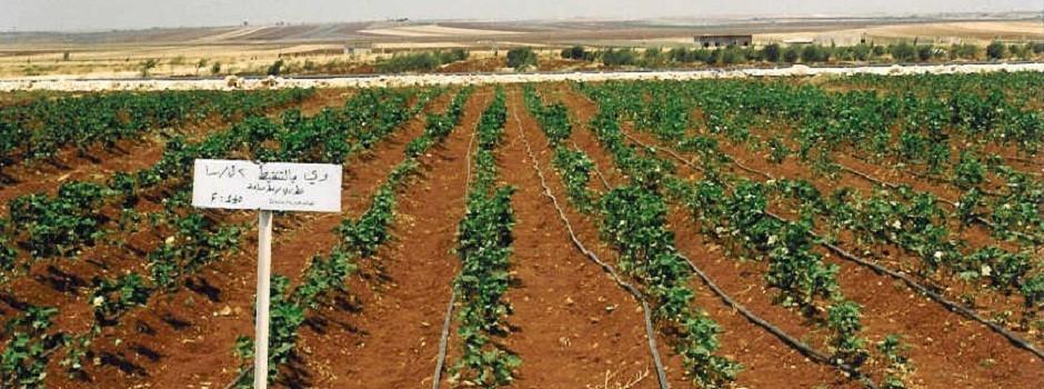 Drip irrigation experiments